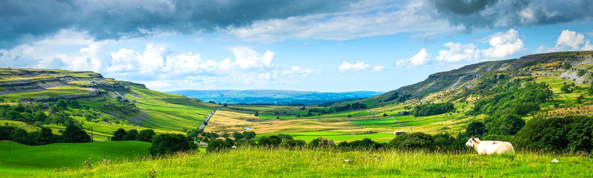 Rural scene. Yorkshire Dales National Park